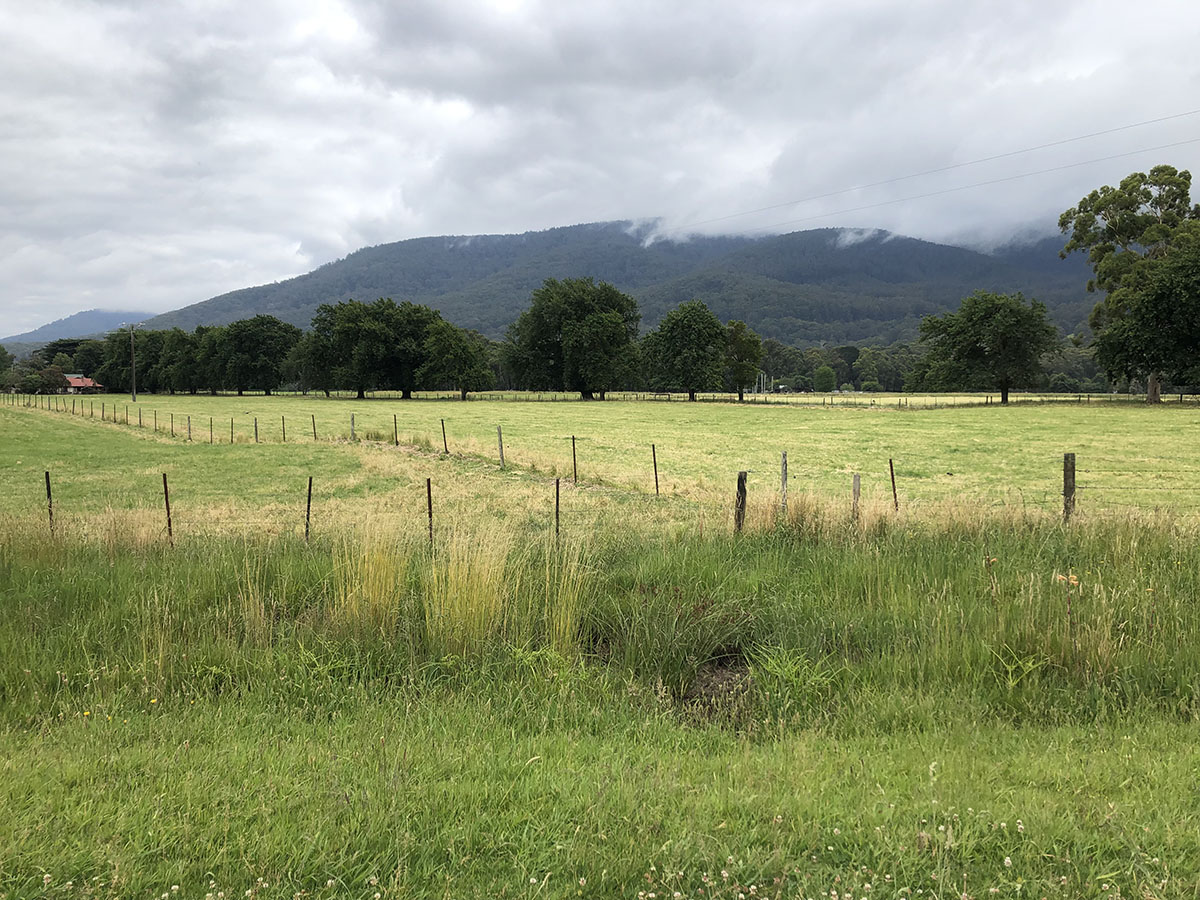 Lilydale to Warburton Rail Trail - farm land and hills