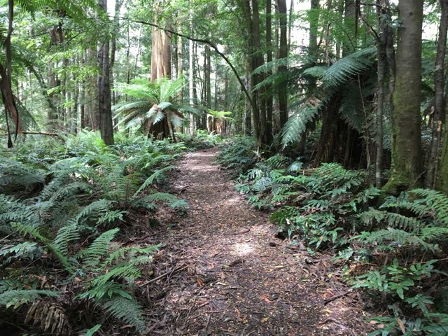 Lush forest and ferns on the Cumberland Track
