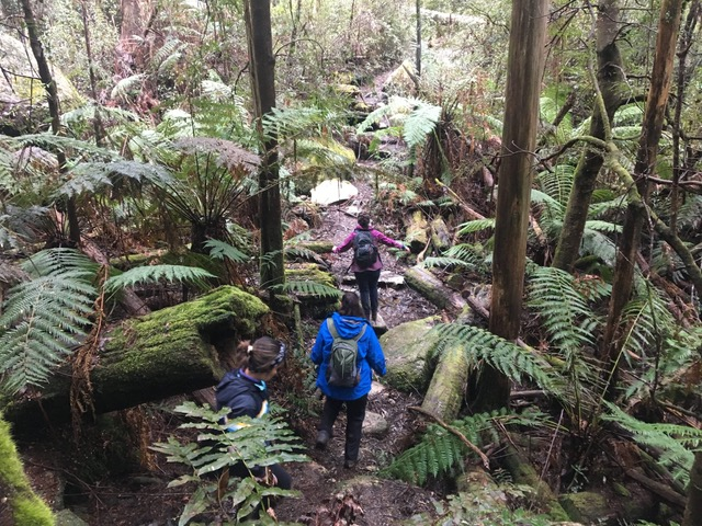 Hikers in the forest near Starlings Gap in the Yarra Ranges National Park