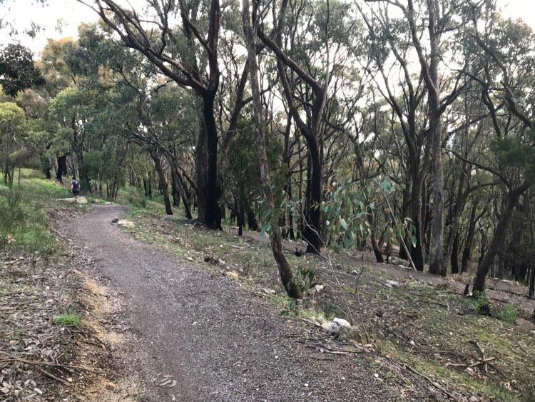 steub-track-south-australia-woodland